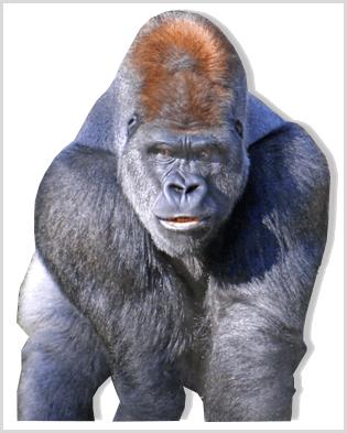 gorilladiet